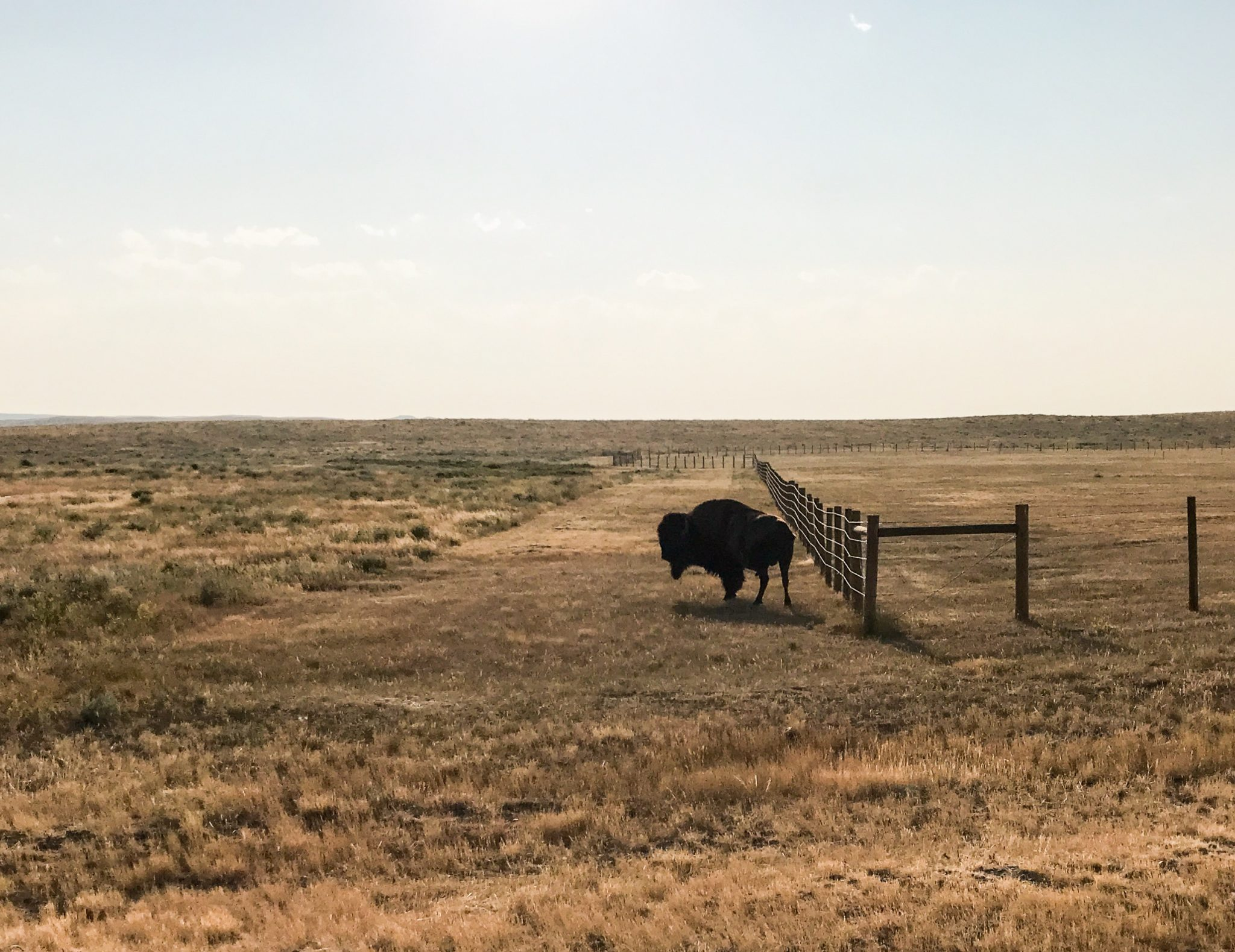 Grasslands National Park i Saskatchewan